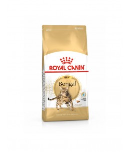Royal Canin Bengal - Sac 2 kg